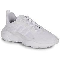 Schoenen Heren Lage sneakers adidas Originals HAIWEE Wit