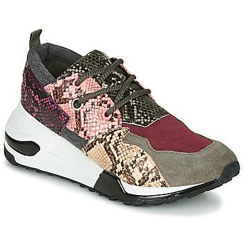 Schoenen Dames Lage sneakers Steve Madden CLIFF Multicolour