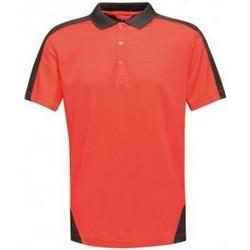 Textiel Heren Polo's korte mouwen Regatta RG663 Klassiek rood/zwart