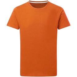 Textiel Heren T-shirts korte mouwen Sg Perfect Oranje