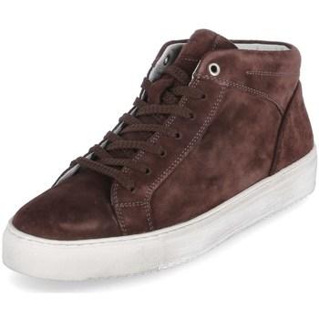 Schoenen Heren Hoge sneakers Sioux 38192 Marron