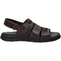 Schoenen Heren Sandalen / Open schoenen Valleverde 20831 Bruin