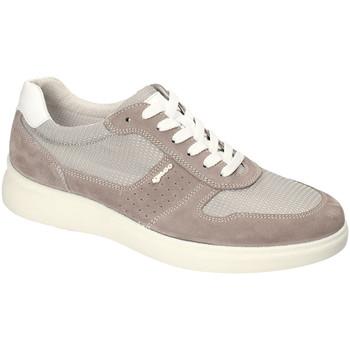 Schoenen Heren Lage sneakers IgI&CO 3120122 Anderen
