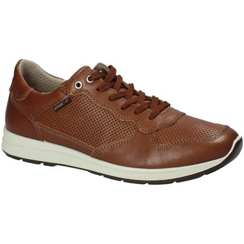 Schoenen Heren Lage sneakers Enval 1211422 Bruin