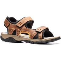 Schoenen Heren Sandalen / Open schoenen Stonefly 108692 Bruin