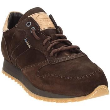 Schoenen Heren Lage sneakers Exton 777 Bruin