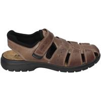 Schoenen Heren Sandalen / Open schoenen Enval 3247522 Bruin