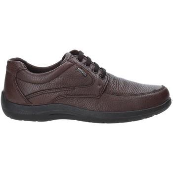 Schoenen Heren Lage sneakers Enval 4233511 Bruin