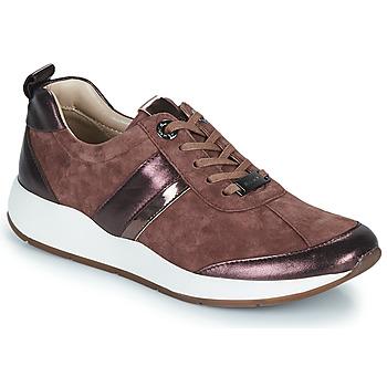 Schoenen Dames Lage sneakers JB Martin KAP Poudré
