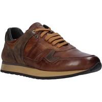 Schoenen Heren Lage sneakers Exton 591 Bruin