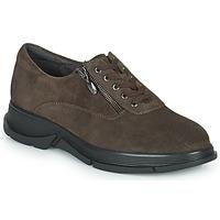Schoenen Dames Lage sneakers Scholl BRISTOL ZIP Brown