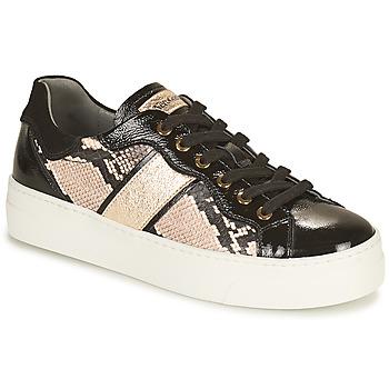 Schoenen Dames Lage sneakers NeroGiardini  Zwart / Goud