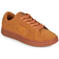 Schoenen Heren Lage sneakers DC Shoes STRIKER  camel