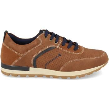 Schoenen Heren Lage sneakers Clowse 0E1109 Camel