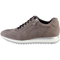 Schoenen Dames Lage sneakers Arnaldo Toscani  Rozig bruin