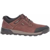 Schoenen Heren Lage sneakers Josef Seibel 32351TE21391 Marron