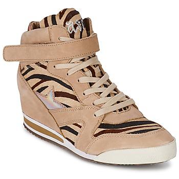 Schoenen Dames Hoge sneakers Ash JAZZ Zebra