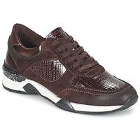 Schoenen Dames Lage sneakers Dream in Green FARRICA Bordeaux