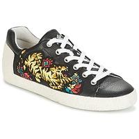 Schoenen Dames Lage sneakers Ash NIAGARA Zwart