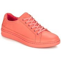 Schoenen Dames Lage sneakers Timberland San Francisco Flavor Oxford Crabapple